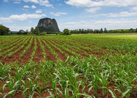 indy_corn_field